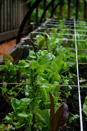 Post image for The Beginner Vegetable Garden – 7 Simple Strategies for Success