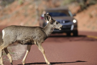 Post image for How to Avoid Deer Car Collisions on Rural Roads