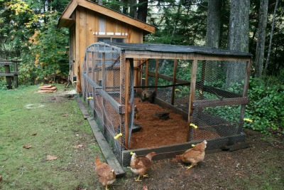 Post image for Vote on a Name for Our New Chicken House!